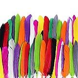 ewtshop® 250 Naturfedern, 10, Federn zum Basteln und zur Dekoration, Länge 10-15 cm